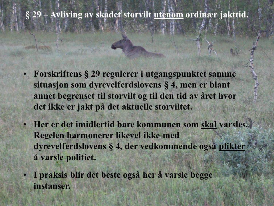 § 29 – Avliving av skadet storvilt utenom ordinær jakttid. Forskriftens § 29 regulerer i utgangspunktet samme situasjon som dyrevelferdslovens § 4, me