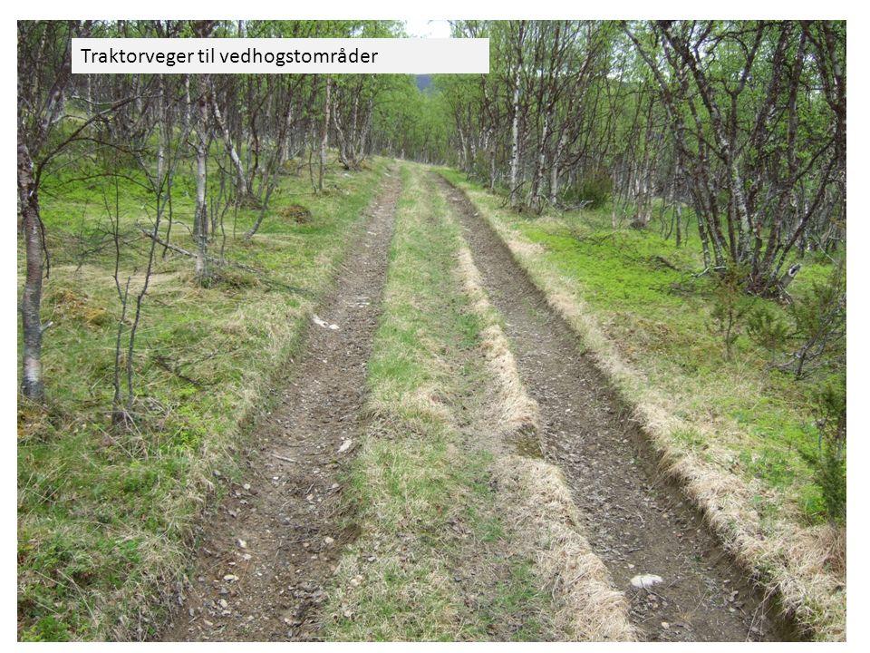 Traktorveger til vedhogstområder