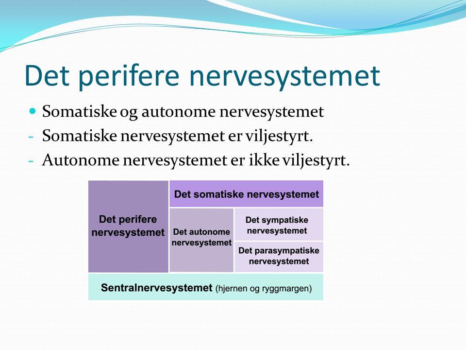 Det perifere nervesystemet Somatiske og autonome nervesystemet - Somatiske nervesystemet er viljestyrt.