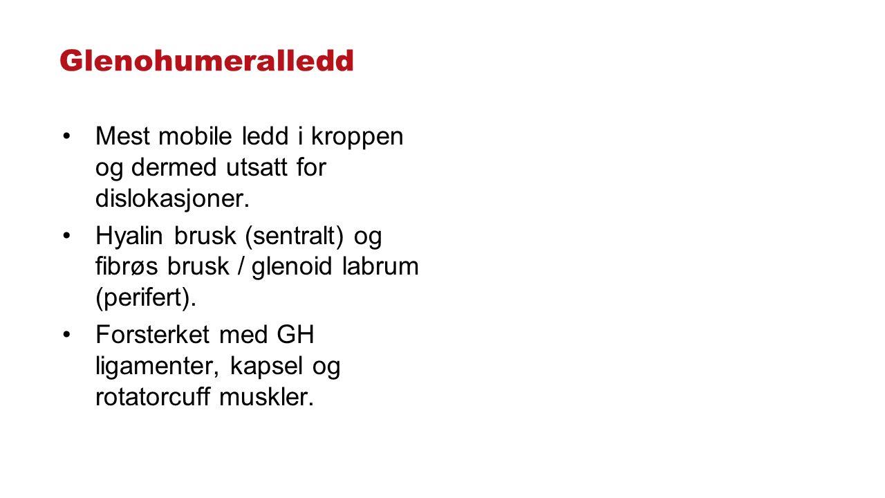 Glenohumeralledd Mest mobile ledd i kroppen og dermed utsatt for dislokasjoner. Hyalin brusk (sentralt) og fibrøs brusk / glenoid labrum (perifert). F