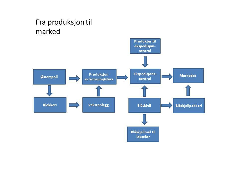 Blåskjell til konsum og industri
