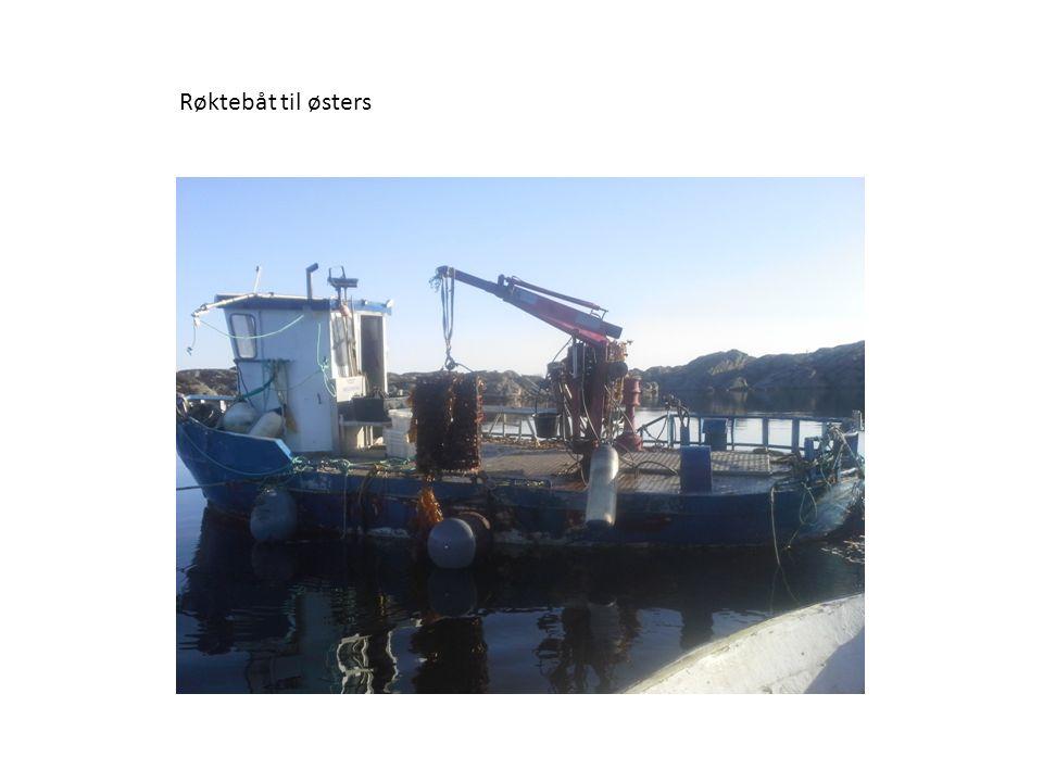 Røktebåt til østers