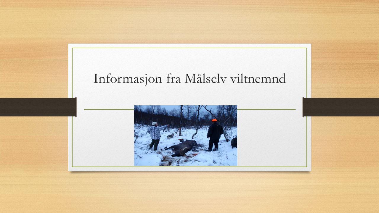 Informasjon fra Målselv viltnemnd