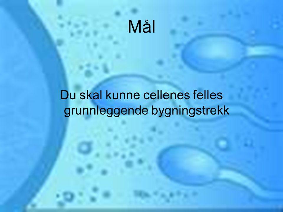 Cellen er byggesteinen Celler er bygd opp av forskjellige deler = CELLELEGEMER: Cellemembran –Tynn hinne som omgir cellen –Slipper stoffer igjen for å utføre livsprosessene –Kontrollerer transport –Halvt gjennomtrengelig –Egne åpninger for store partikler Cellevæske –Tyktflytende –Består av vann og stoffer som cellen trenger for å vokse og leve Arvestoff/DNA –Styrer produksjonen i cellen –Hvordan cellen skal se ut –Hva den skal utføre av oppgaver