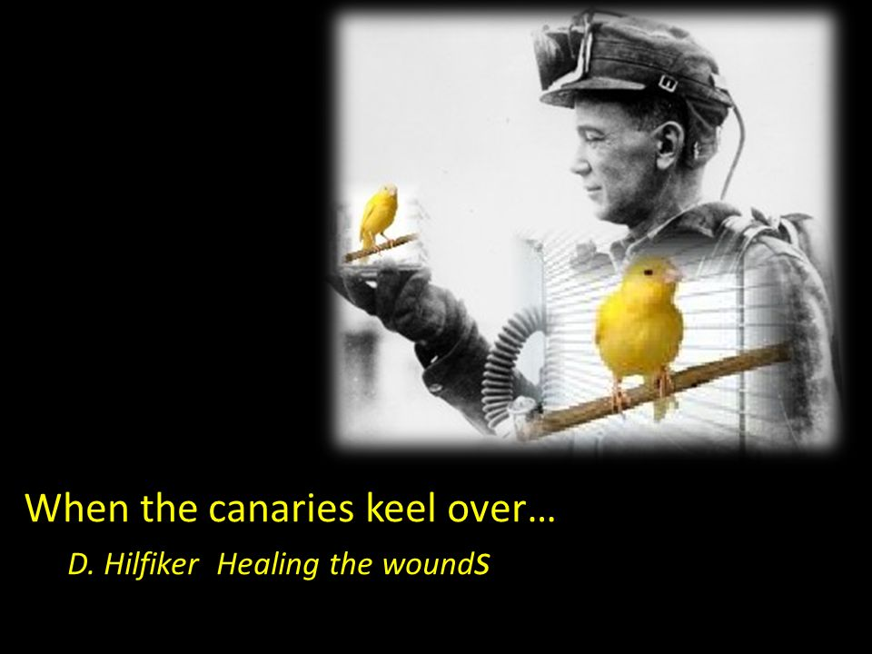 When the canaries keel over… D. Hilfiker Healing the wound s