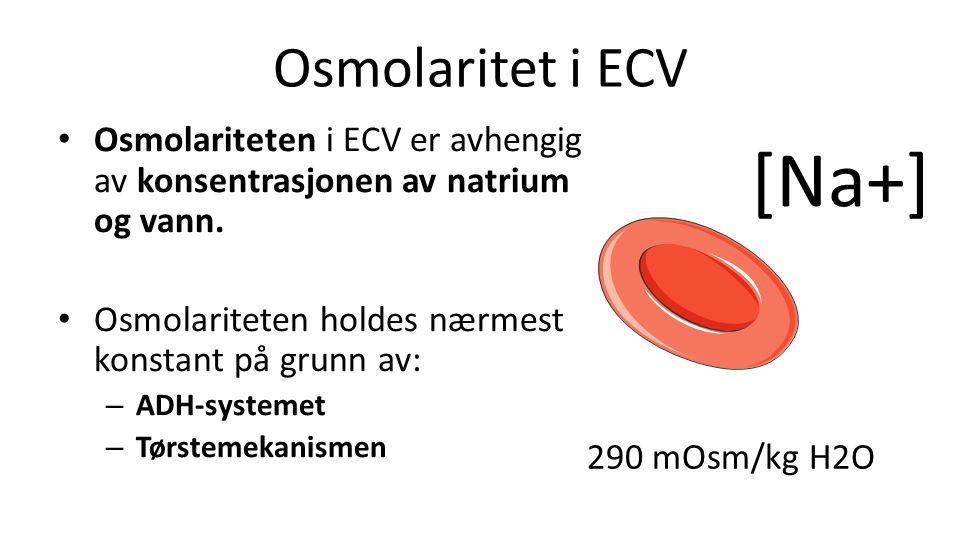 Osmolaritet i ECV [Na+] Osmolariteten i ECV er avhengig av konsentrasjonen av natrium og vann.