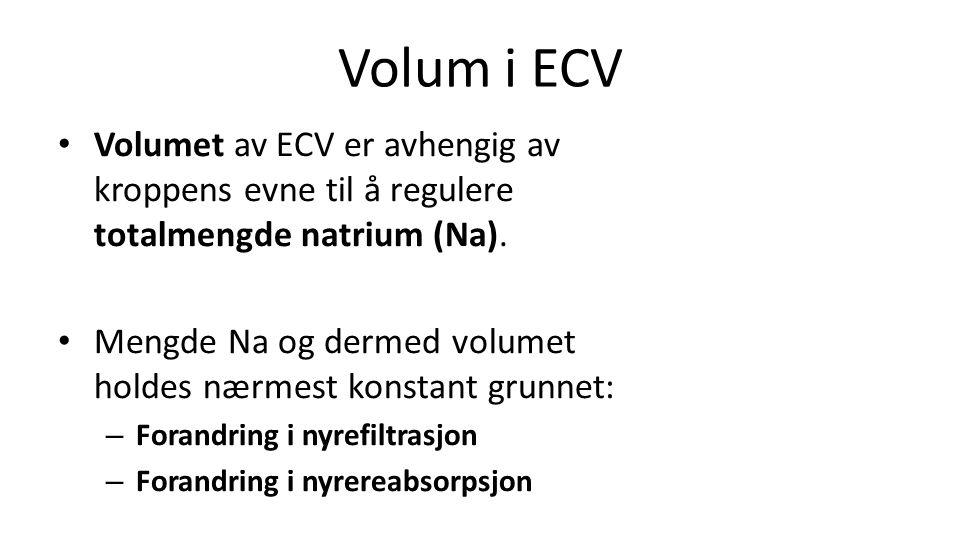 Volum i ECV Volumet av ECV er avhengig av kroppens evne til å regulere totalmengde natrium (Na).