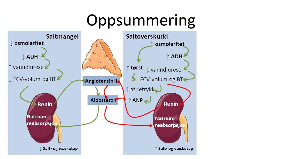 Oppsummering SaltmangelSaltoverskudd ↓ osmolaritet ↓ ADH ↑ vanndiurese ↓ ECV-volum og BT Renin Angiotensin II Aldosteron Natrium reabsorpsjon ↓ Salt- og væsketap ↑ osmolaritet ↑ ADH ↓ vanndiurese ↑ ECV-volum og BT ↑ tørst ↑ atrietrykk ↑ ANP Renin Natrium reabsorpsjon ↑ Salt- og væsketap