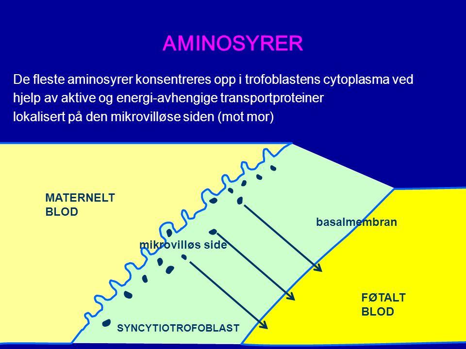 AMINOSYRER De fleste aminosyrer konsentreres opp i trofoblastens cytoplasma ved hjelp av aktive og energi-avhengige transportproteiner lokalisert på den mikrovilløse siden (mot mor) MATERNELT BLOD mikrovilløs side SYNCYTIOTROFOBLAST FØTALT BLOD basalmembran