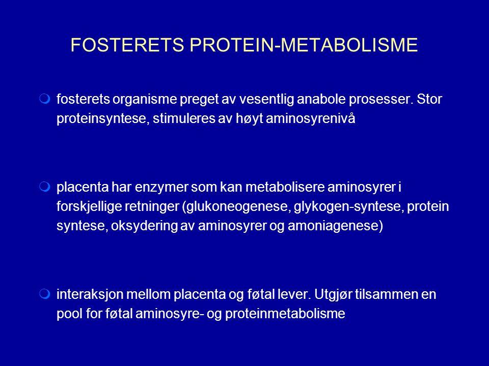 FOSTERETS PROTEIN-METABOLISME  fosterets organisme preget av vesentlig anabole prosesser.