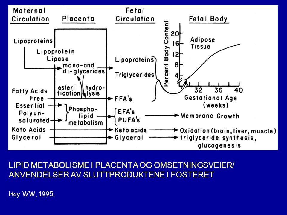 LIPID METABOLISME I PLACENTA OG OMSETNINGSVEIER/ ANVENDELSER AV SLUTTPRODUKTENE I FOSTERET Hay WW, 1995.
