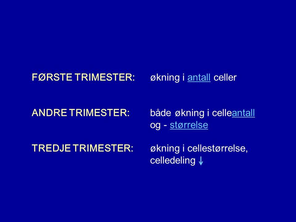 FØRSTE TRIMESTER: økning i antall celler ANDRE TRIMESTER: både økning i celleantall og - størrelse TREDJE TRIMESTER: økning i cellestørrelse, celledeling