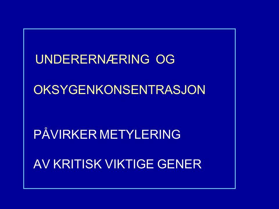 UNDERERNÆRING OG OKSYGENKONSENTRASJON PÅVIRKER METYLERING AV KRITISK VIKTIGE GENER