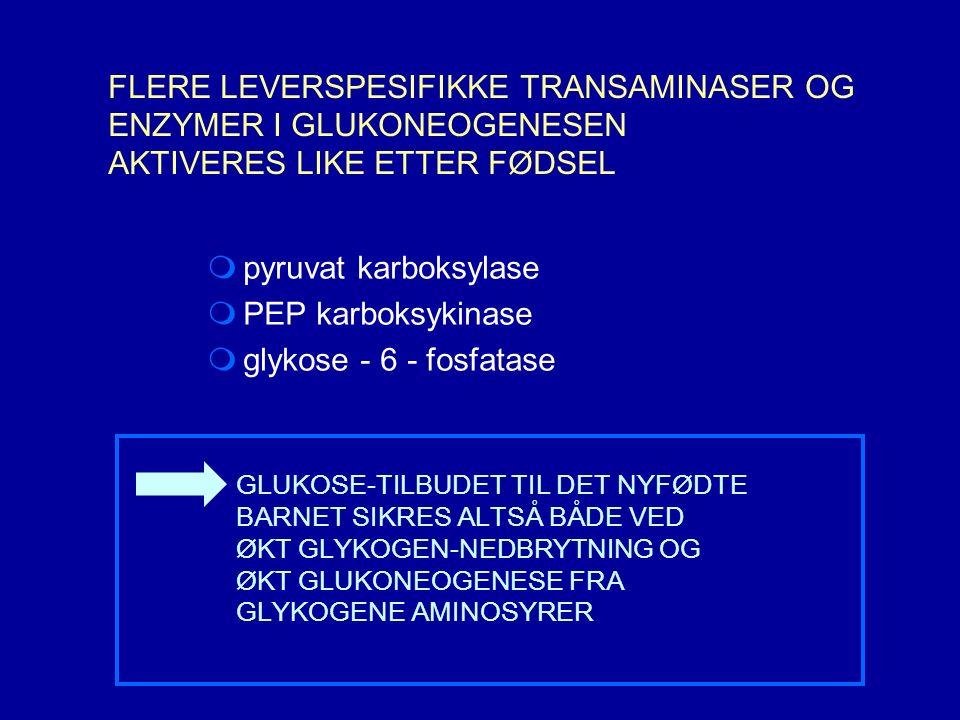  pyruvat karboksylase  PEP karboksykinase  glykose - 6 - fosfatase GLUKOSE-TILBUDET TIL DET NYFØDTE BARNET SIKRES ALTSÅ BÅDE VED ØKT GLYKOGEN-NEDBRYTNING OG ØKT GLUKONEOGENESE FRA GLYKOGENE AMINOSYRER FLERE LEVERSPESIFIKKE TRANSAMINASER OG ENZYMER I GLUKONEOGENESEN AKTIVERES LIKE ETTER FØDSEL