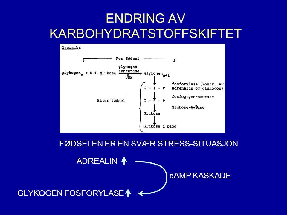 ENDRING AV KARBOHYDRATSTOFFSKIFTET FØDSELEN ER EN SVÆR STRESS-SITUASJON cAMP KASKADE GLYKOGEN FOSFORYLASE ADREALIN