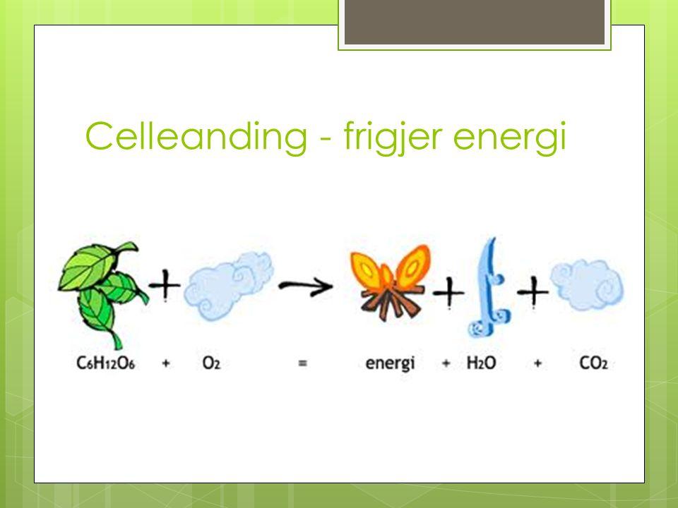 Celleanding - frigjer energi