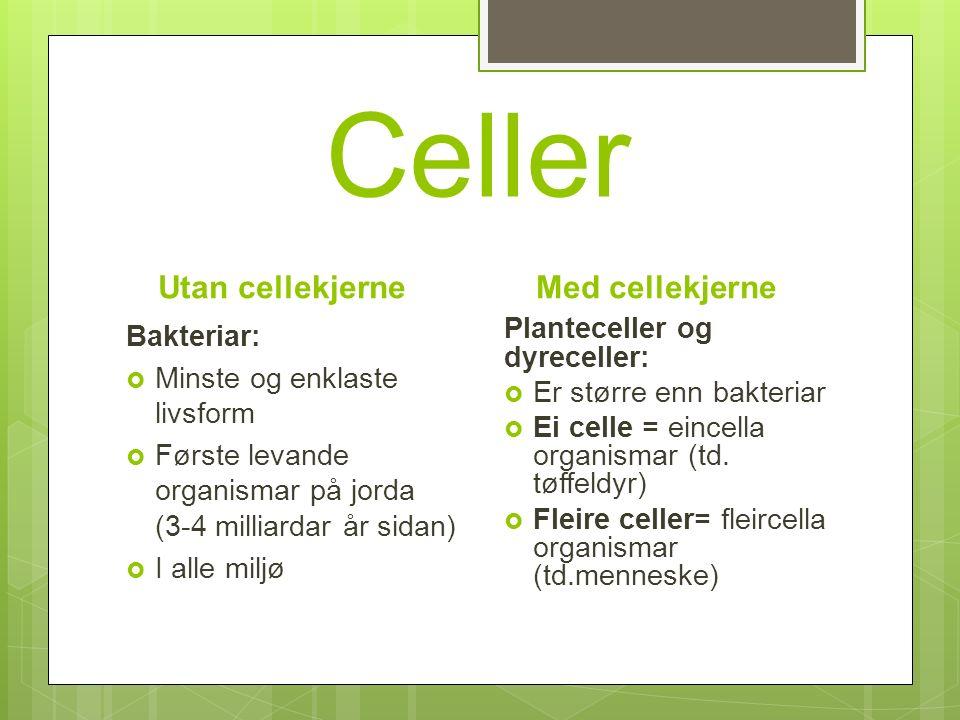 Celler Utan cellekjerne Bakteriar:  Minste og enklaste livsform  Første levande organismar på jorda (3-4 milliardar år sidan)  I alle miljø Med cellekjerne Planteceller og dyreceller:  Er større enn bakteriar  Ei celle = eincella organismar (td.