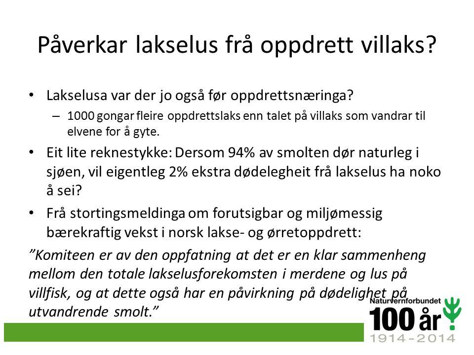 Påverkar lakselus frå oppdrett villaks. Lakselusa var der jo også før oppdrettsnæringa.