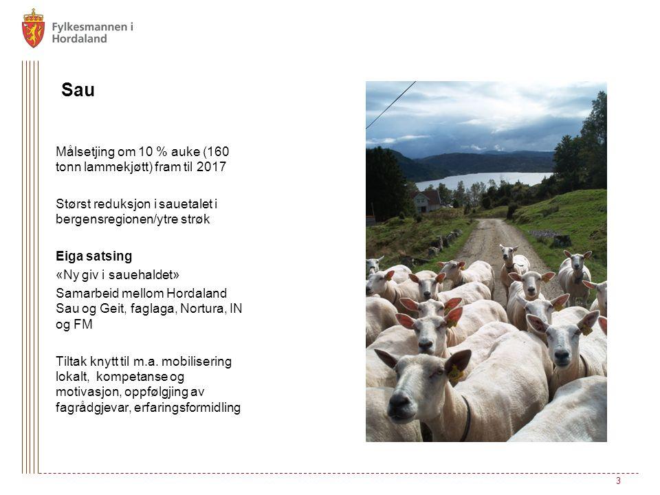 Sau Målsetjing om 10 % auke (160 tonn lammekjøtt) fram til 2017 Størst reduksjon i sauetalet i bergensregionen/ytre strøk Eiga satsing «Ny giv i sauehaldet» Samarbeid mellom Hordaland Sau og Geit, faglaga, Nortura, IN og FM Tiltak knytt til m.a.