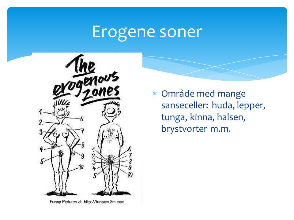 Erogene soner  Område med mange sanseceller: huda, lepper, tunga, kinna, halsen, brystvorter m.m.