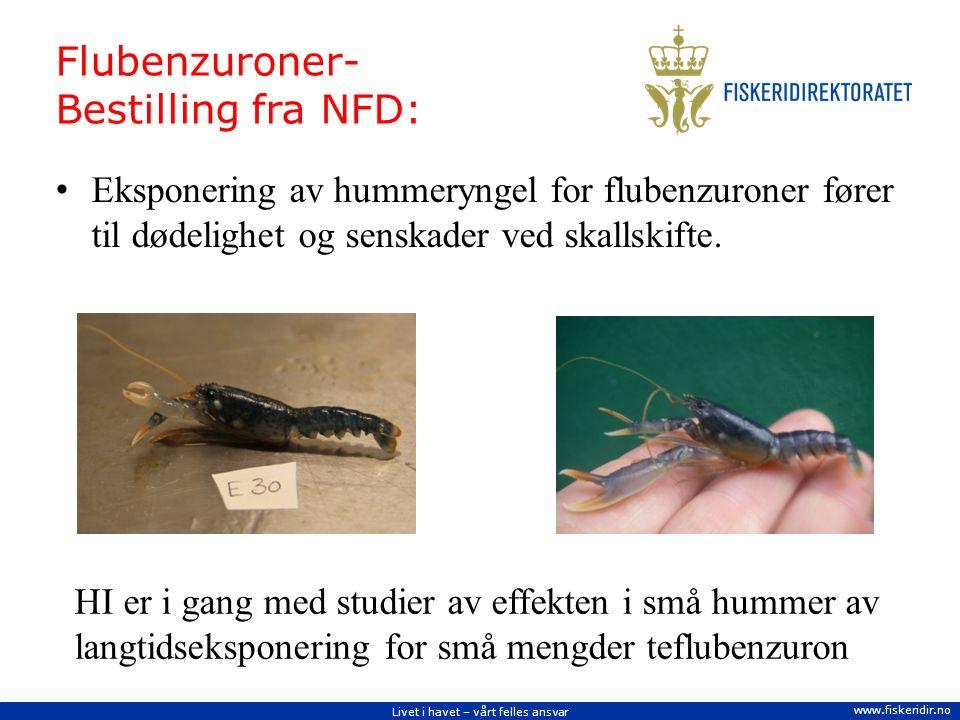 Livet i havet – vårt felles ansvar www.fiskeridir.no Flubenzuroner- Bestilling fra NFD: Eksponering av hummeryngel for flubenzuroner fører til dødelighet og senskader ved skallskifte.
