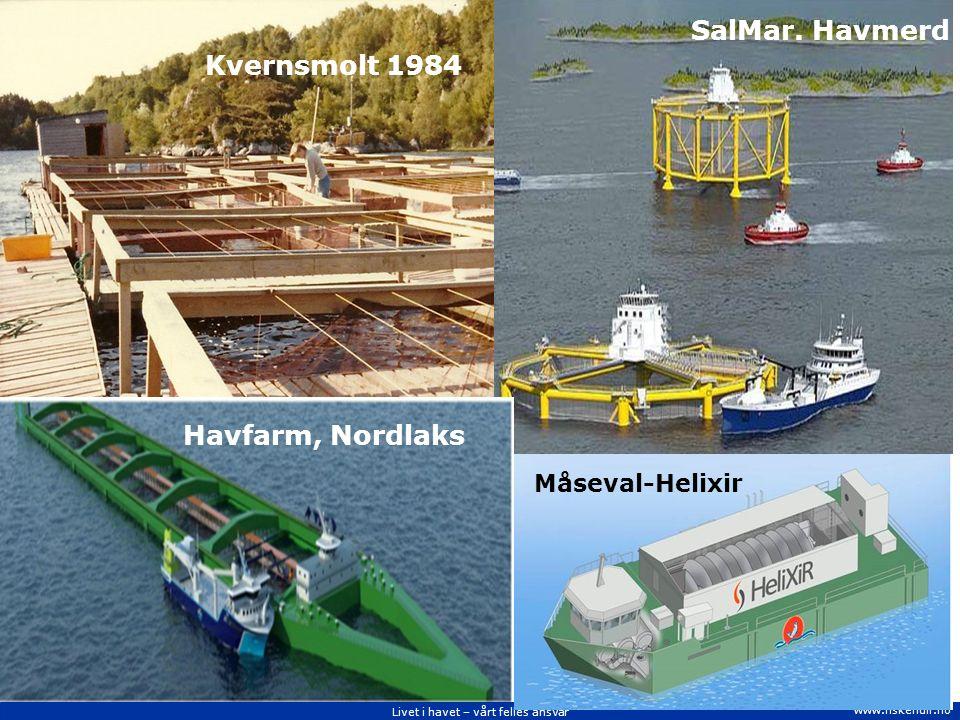 Livet i havet – vårt felles ansvar www.fiskeridir.no Havfarm, Nordlaks SalMar.