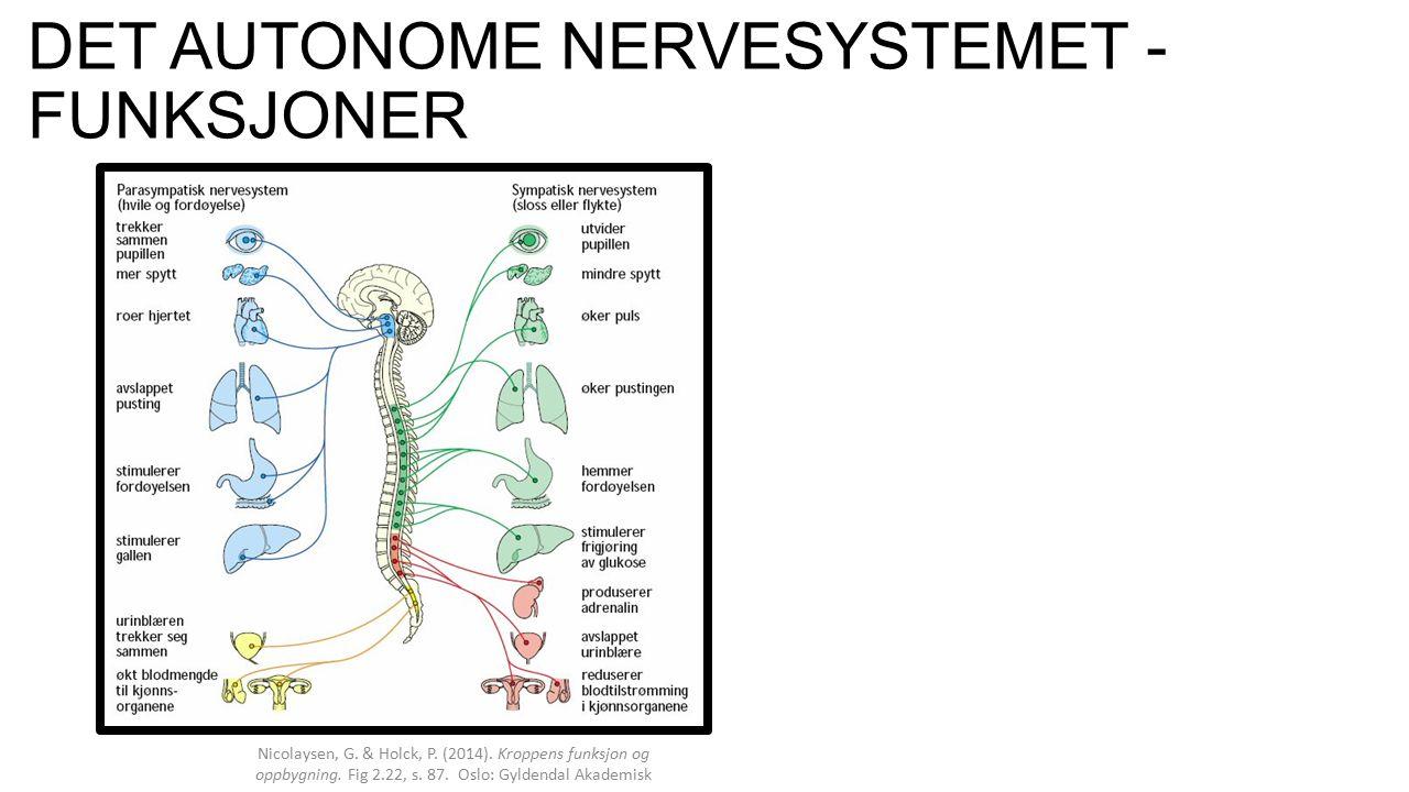 OPPSUMMERING Det autonome nervesystemet er det selvstendige ubevisste nervesystemet som styrer kroppens indre organer.