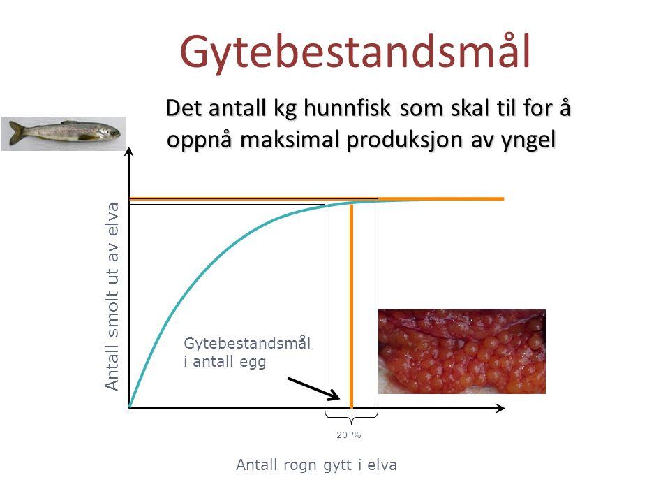Antall rogn gytt i elva Antall smolt ut av elva Gytebestandsmål i antall egg Gytebestandsmål 20 % Det antall kg hunnfisk som skal til for å oppnå maks