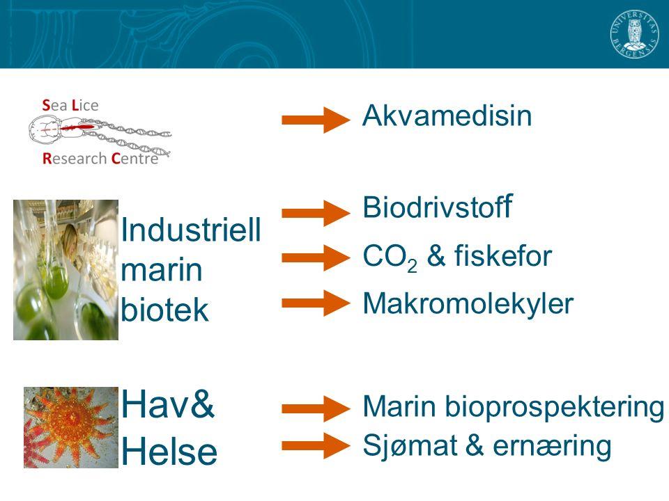 Hav& Helse Akvamedisin Biodrivstof f CO 2 & fiskefor Marin bioprospektering Makromolekyler Sjømat & ernæring Industriell marin biotek