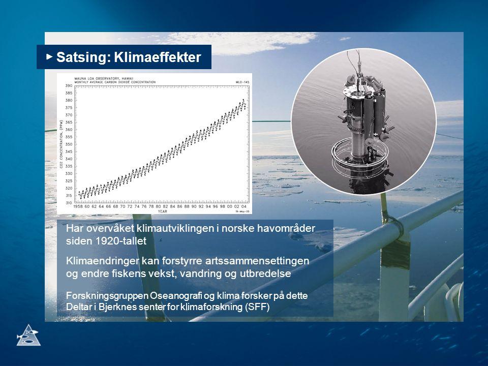 ▶ Satsing: Klimaeffekter Har overvåket klimautviklingen i norske havområder siden 1920-tallet Klimaendringer kan forstyrre artssammensettingen og endre fiskens vekst, vandring og utbredelse Forskningsgruppen Oseanografi og klima forsker på dette Deltar i Bjerknes senter for klimaforskning (SFF)