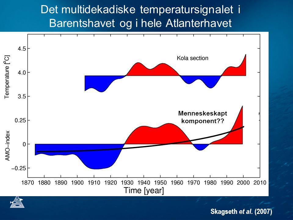 Det multidekadiske temperatursignalet i Barentshavet og i hele Atlanterhavet Skagseth et al. (2007) n Menneskeskapt komponent??