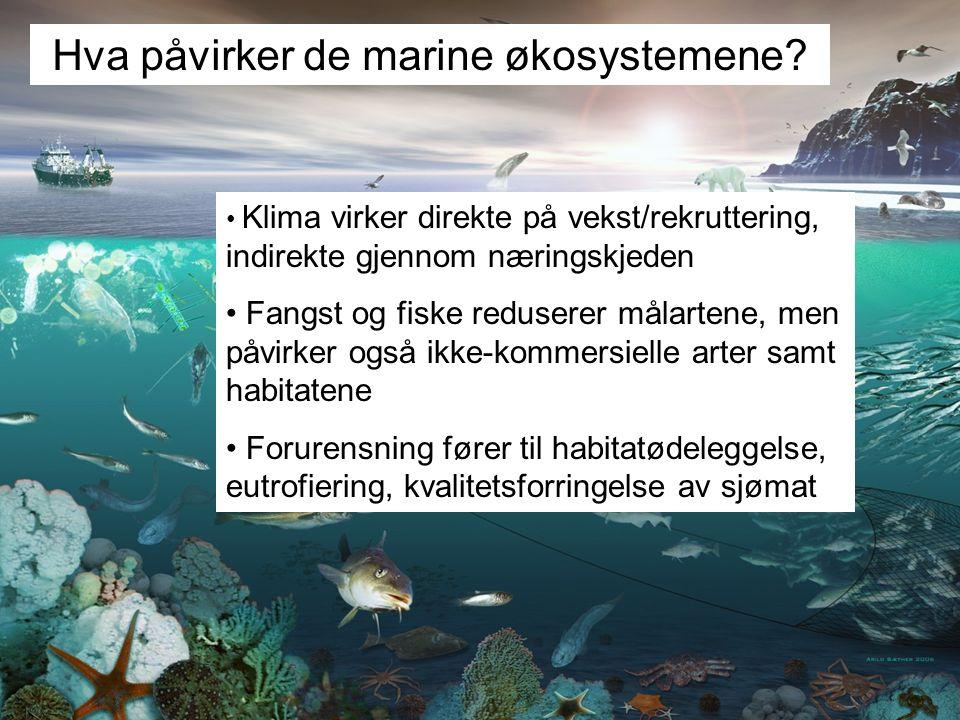Hva påvirker de marine økosystemene? Klima virker direkte på vekst/rekruttering, indirekte gjennom næringskjeden Fangst og fiske reduserer målartene,