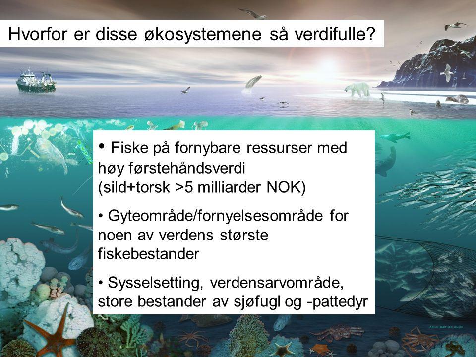 Hvorfor er disse økosystemene så verdifulle? Fiske på fornybare ressurser med høy førstehåndsverdi (sild+torsk >5 milliarder NOK) Gyteområde/fornyelse