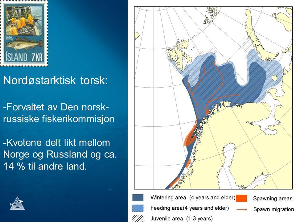 Nordøstarktisk torsk: -Forvaltet av Den norsk- russiske fiskerikommisjon -Kvotene delt likt mellom Norge og Russland og ca. 14 % til andre land.