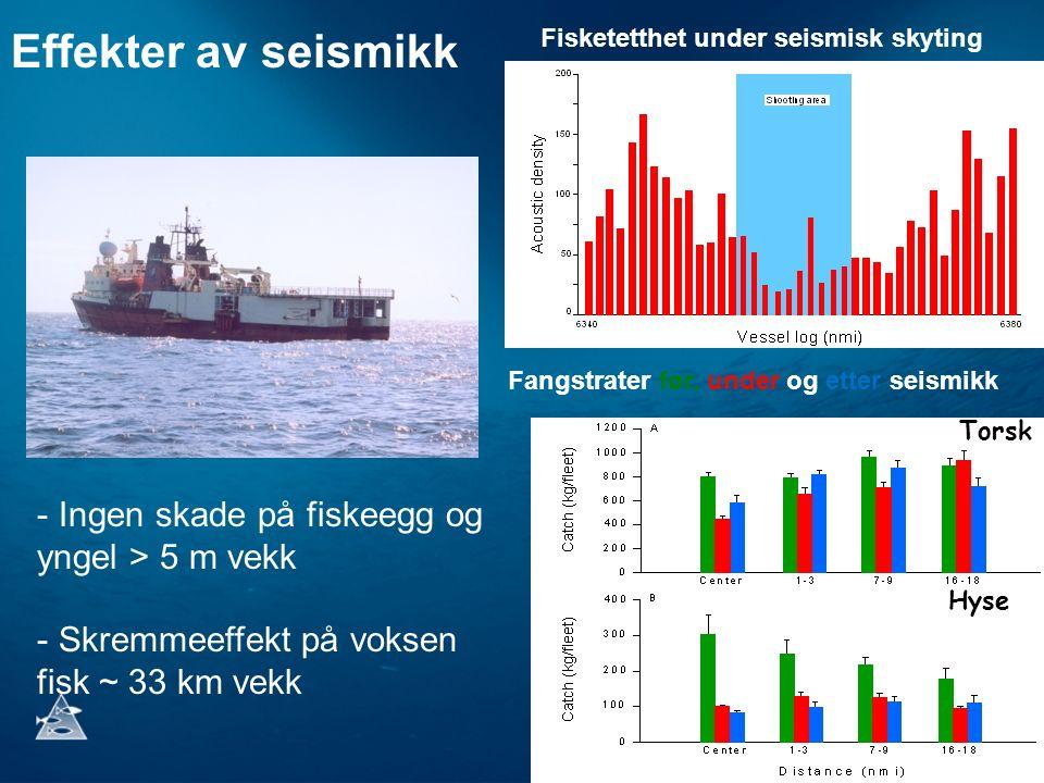 Effekter av seismikk - Ingen skade på fiskeegg og yngel > 5 m vekk - Skremmeeffekt på voksen fisk ~ 33 km vekk Fisketetthet under seismisk skyting Fangstrater før, under og etter seismikk Torsk Hyse