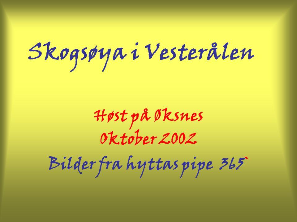 Skogsøya i Vesterålen Høst på Øksnes Oktober 2002 Bilder fra hyttas pipe 365 `