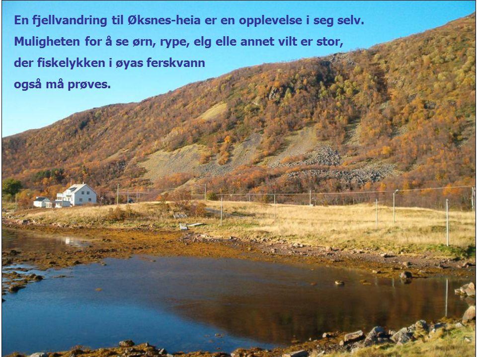 En fjellvandring til Øksnes-heia er en opplevelse i seg selv. Muligheten for å se ørn, rype, elg elle annet vilt er stor, der fiskelykken i øyas fersk