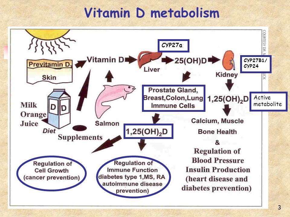 3 Vitamin D metabolism CYP27a CYP27B1/ CYP24 Active metabolite