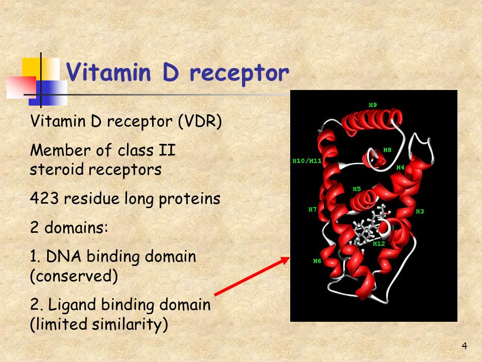 4 Vitamin D receptor Vitamin D receptor (VDR) Member of class II steroid receptors 423 residue long proteins 2 domains: 1. DNA binding domain (conserv