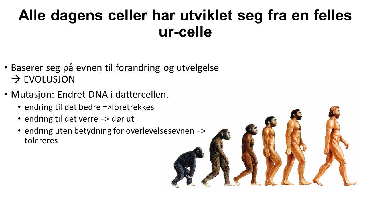 Alle dagens celler har utviklet seg fra en felles ur-celle Baserer seg på evnen til forandring og utvelgelse  EVOLUSJON Mutasjon: Endret DNA i dattercellen.