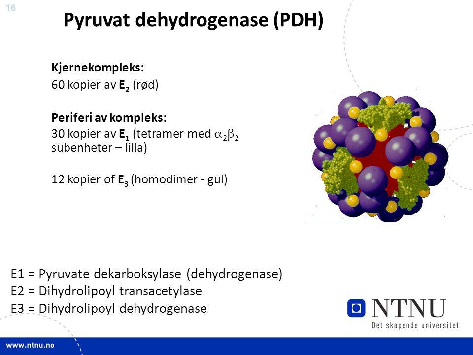 16 Kjernekompleks: 60 kopier av E 2 (rød) Periferi av kompleks: 30 kopier av E 1 (tetramer med  2  2 subenheter – lilla) 12 kopier of E 3 (homodimer - gul) E1 = Pyruvate dekarboksylase (dehydrogenase) E2 = Dihydrolipoyl transacetylase E3 = Dihydrolipoyl dehydrogenase Pyruvat dehydrogenase (PDH)
