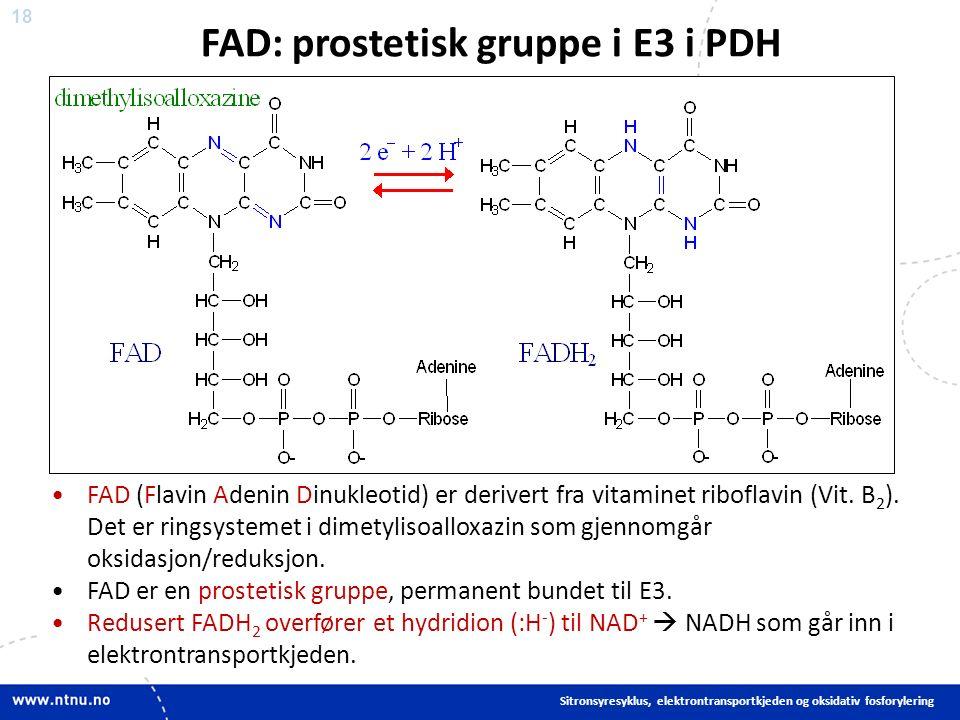 18 FAD (Flavin Adenin Dinukleotid) er derivert fra vitaminet riboflavin (Vit.