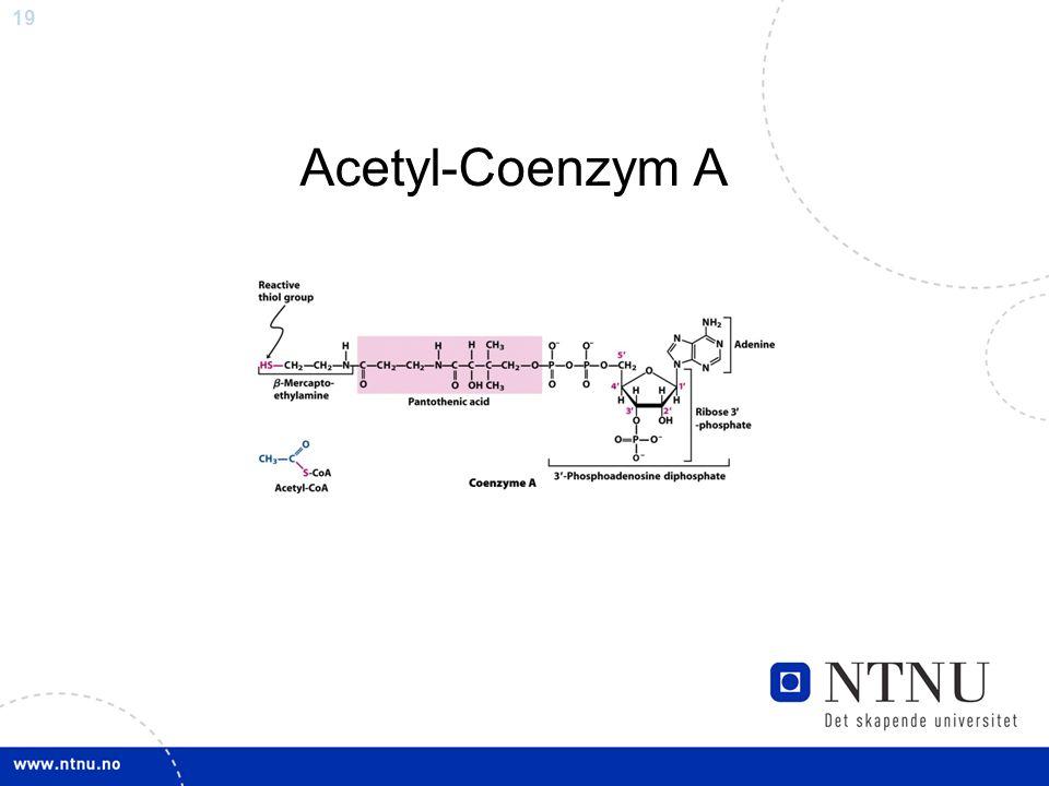 19 Acetyl-Coenzym A