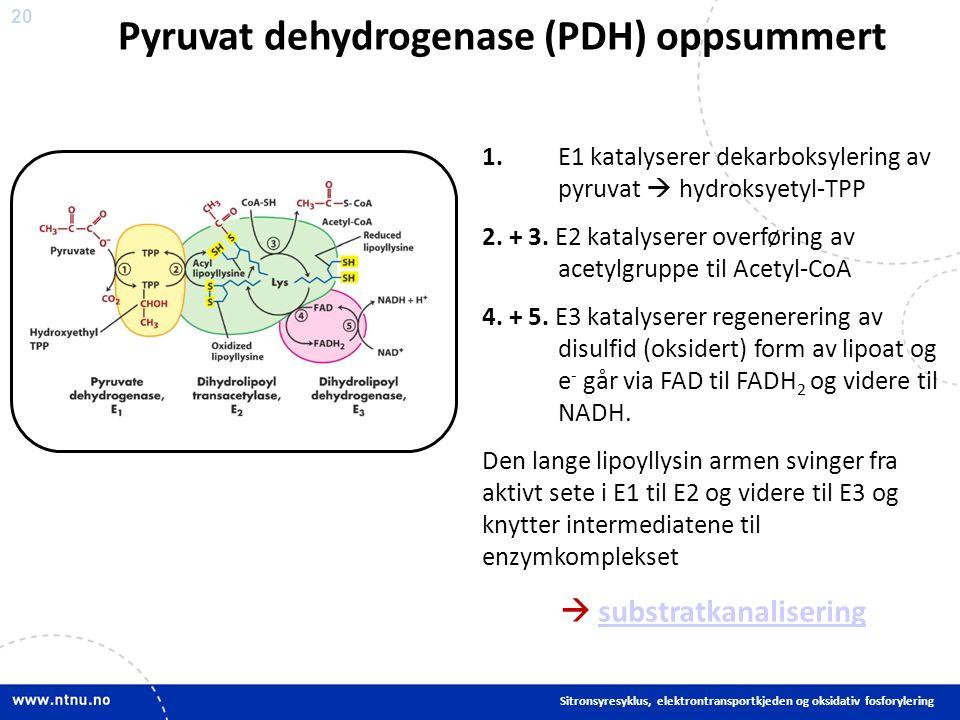 20 1. E1 katalyserer dekarboksylering av pyruvat  hydroksyetyl-TPP 2.