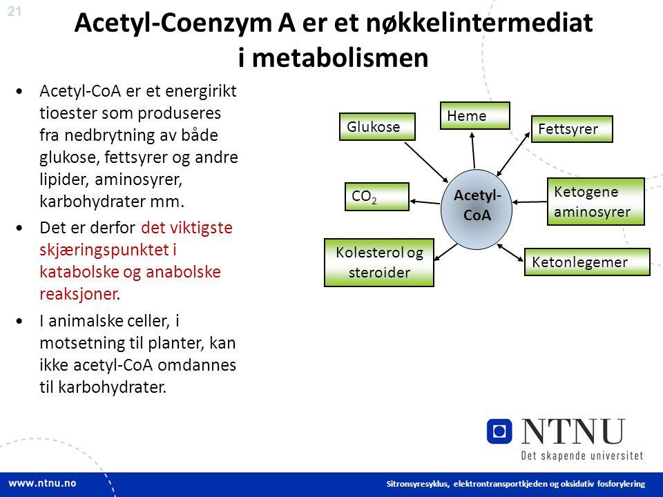 21 Acetyl-Coenzym A er et nøkkelintermediat i metabolismen Acetyl-CoA er et energirikt tioester som produseres fra nedbrytning av både glukose, fettsyrer og andre lipider, aminosyrer, karbohydrater mm.