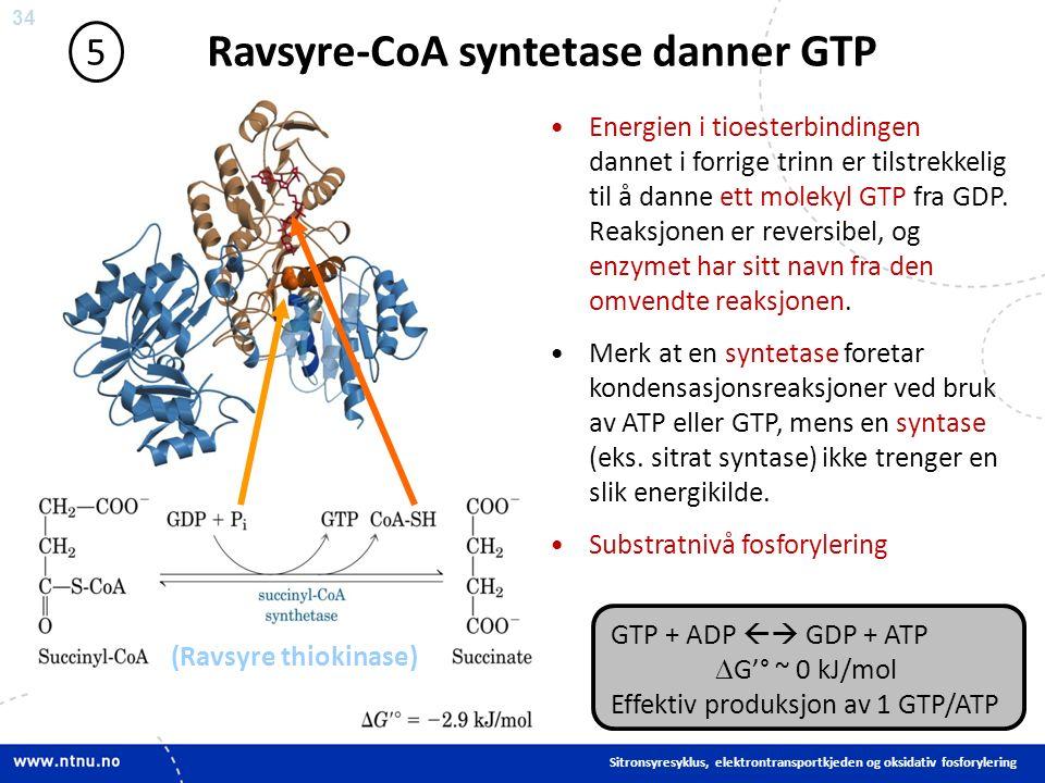 34 Ravsyre-CoA syntetase danner GTP 5 Energien i tioesterbindingen dannet i forrige trinn er tilstrekkelig til å danne ett molekyl GTP fra GDP.