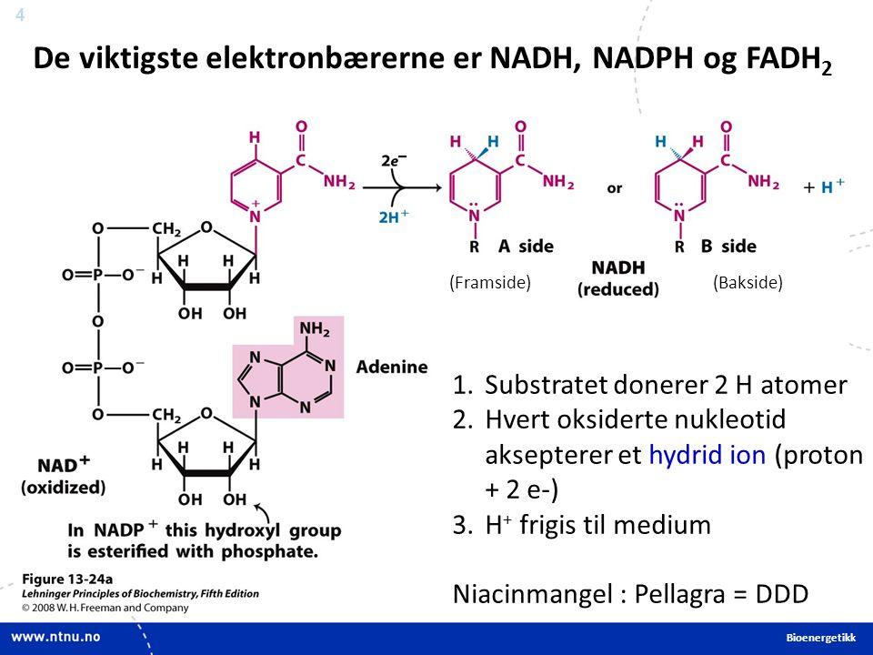 4 De viktigste elektronbærerne er NADH, NADPH og FADH 2 1.Substratet donerer 2 H atomer 2.Hvert oksiderte nukleotid aksepterer et hydrid ion (proton + 2 e-) 3.H + frigis til medium Niacinmangel : Pellagra = DDD (Framside)(Bakside) Bioenergetikk