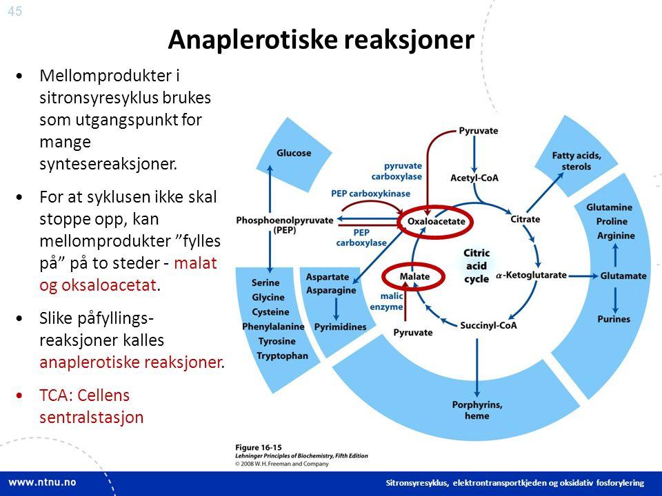 45 Anaplerotiske reaksjoner Mellomprodukter i sitronsyresyklus brukes som utgangspunkt for mange syntesereaksjoner.