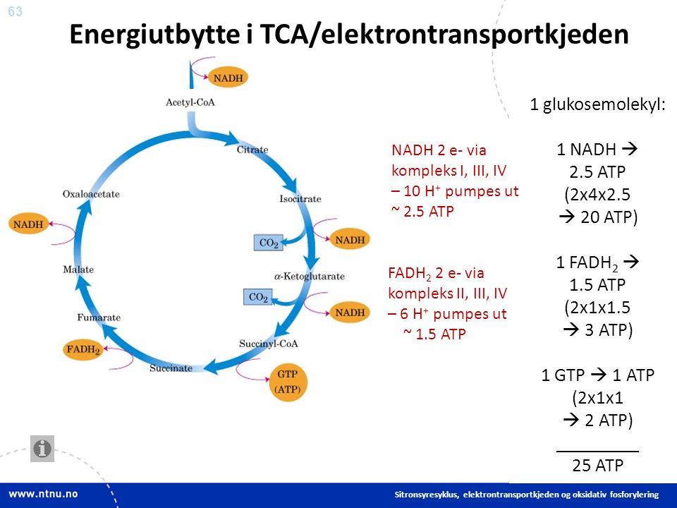63 Energiutbytte i TCA/elektrontransportkjeden Sitronsyresyklus, elektrontransportkjeden og oksidativ fosforylering 1 glukosemolekyl: 1 NADH  2.5 ATP (2x4x2.5  20 ATP) 1 FADH 2  1.5 ATP (2x1x1.5  3 ATP) 1 GTP  1 ATP (2x1x1  2 ATP) _________ 25 ATP NADH 2 e- via kompleks I, III, IV – 10 H + pumpes ut ~ 2.5 ATP FADH 2 2 e- via kompleks II, III, IV – 6 H + pumpes ut ~ 1.5 ATP