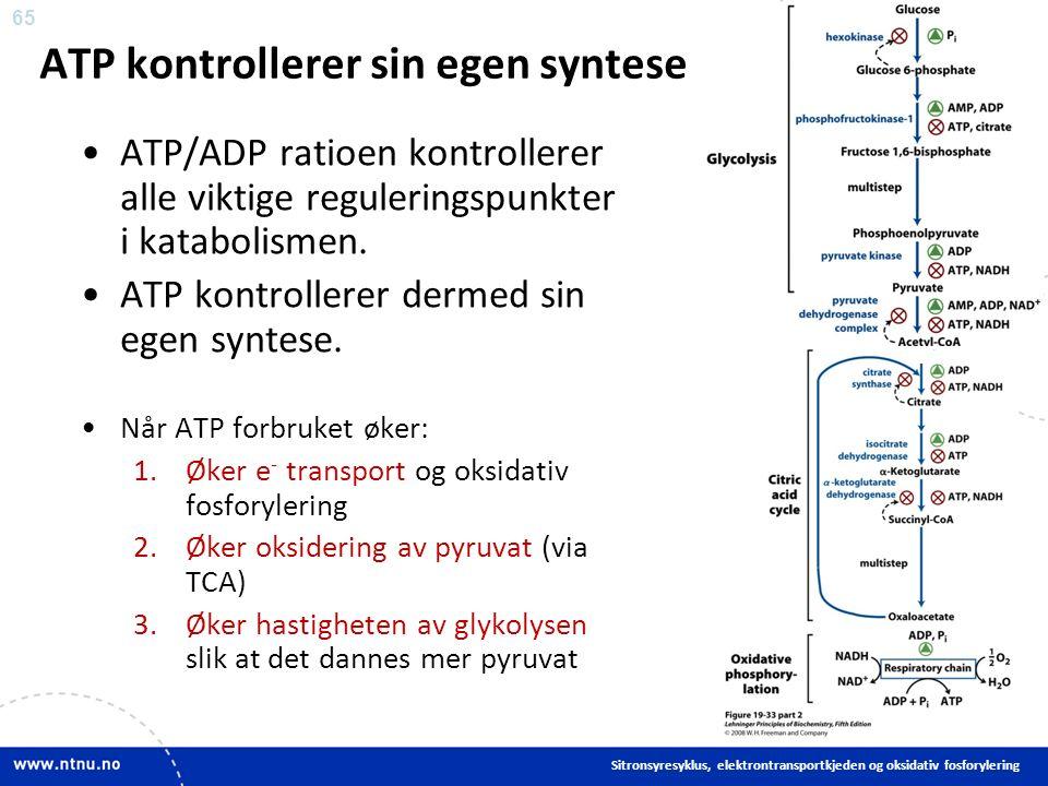 65 ATP kontrollerer sin egen syntese ATP/ADP ratioen kontrollerer alle viktige reguleringspunkter i katabolismen.